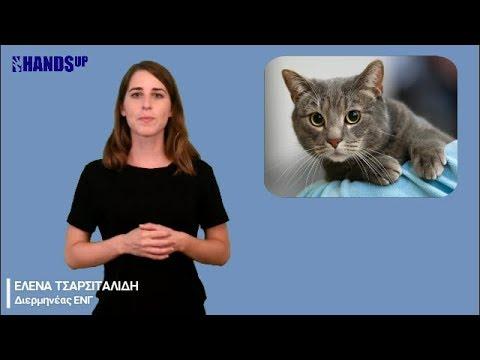 08 Αυγούστου: Παγκόσμια Ημέρα Γάτας