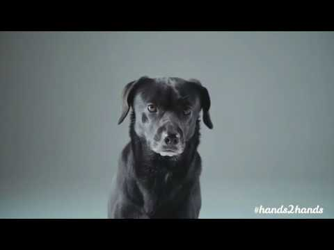 Hands2Hands: Dogs' Voice & Woof Club